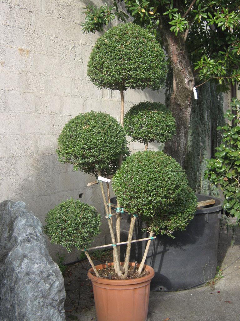 Piante decorative per giardino vendita a padova for Piante decorative